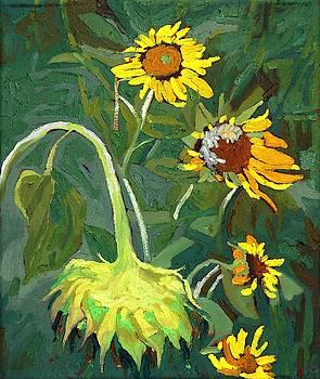 Phil Chadwick - Legion of Sunflowers