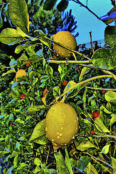 Lemons and tangerines. by Andy Za