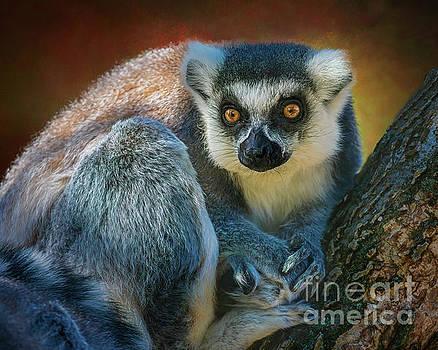 Lemur by Warrena J Barnerd