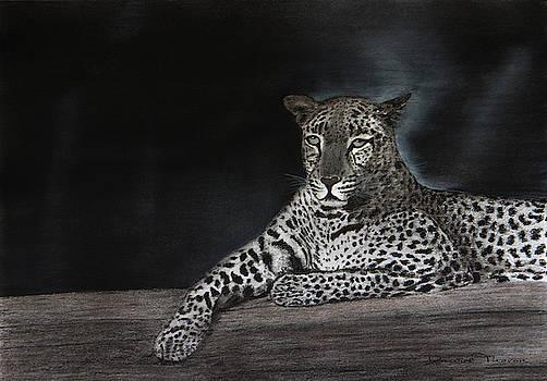 Leopard by Dawid Theron