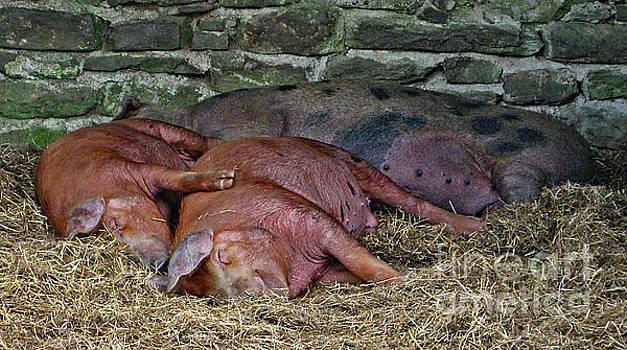 Let Sleeping Pigs Lie by PJ Boylan