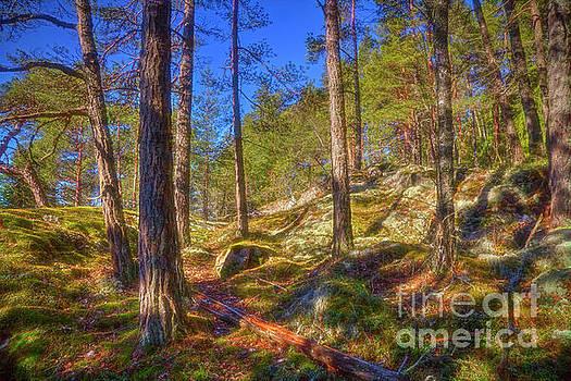 Let's go to the woods by Veikko Suikkanen