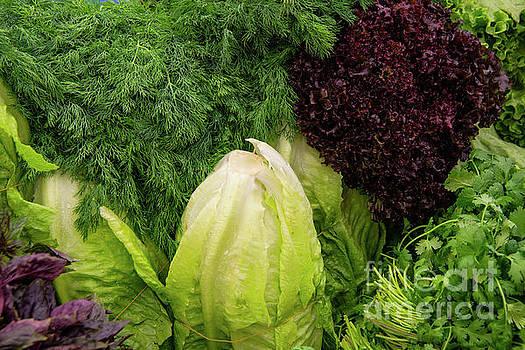 Bob Phillips - Lettuce and Greens
