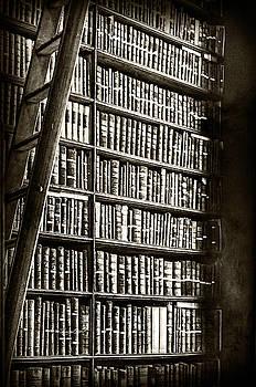 Sharon Popek - Library Shelves