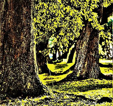 Live Oak Tree Grove At Audubon Park In New Orleans by Michael Hoard