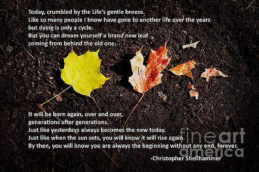 LIfe's cycle by Christopher Shellhammer