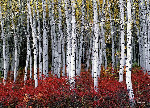 Light in Forest by Leland D Howard