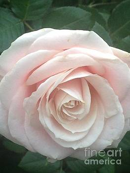 Light Pink Rose 2 by Kim Sy Ok