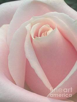 Light Pink Rose by Kim Sy Ok