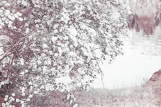 Jenny Rainbow - Light Vintage Spring