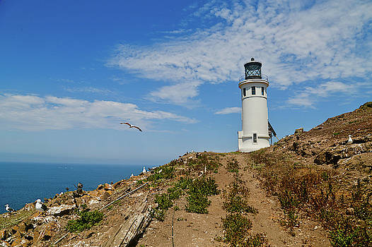 Lighthouse Vi by Yellow Caf�