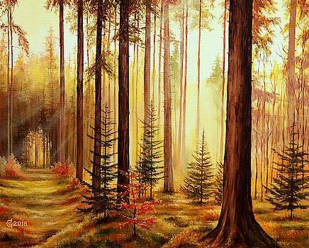 Lights and Shadows by Svetoslav Stoyanov