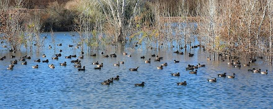 Like Ducks On A Pond by Allan Van Gasbeck