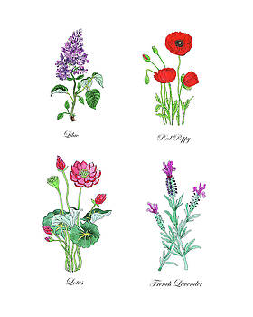 Lilac Poppy Lotus Lavender Botanical Watercolor  by Irina Sztukowski