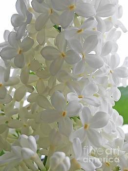 Lilac White by Jasna Dragun