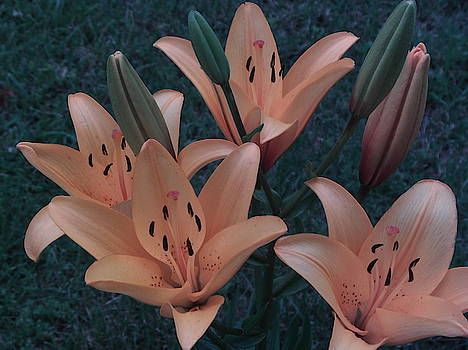 Lilies by Michael Hoback