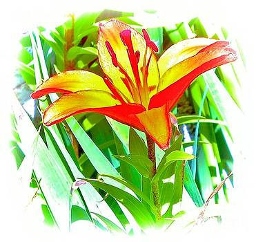 Lily 5 by JudithAnne Monahan
