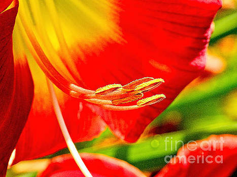 Lily Flower by Ella Kaye Dickey