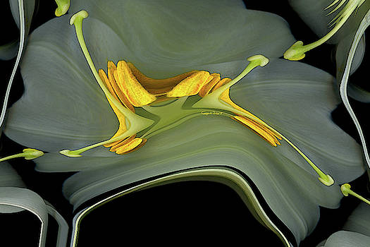 Lily Synapse by Carel Schmidlkofer