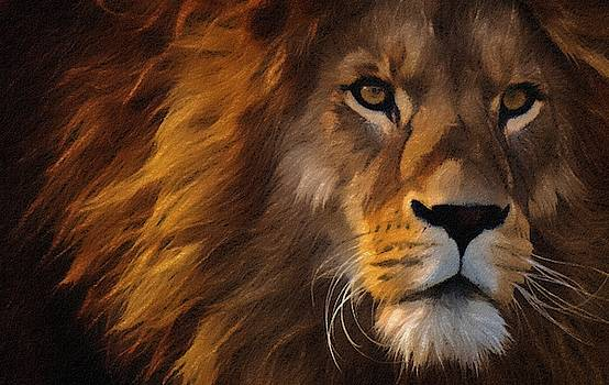Lion portrait by Vincent Monozlay