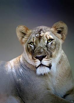 Lioness portrait  by Savannah Gibbs