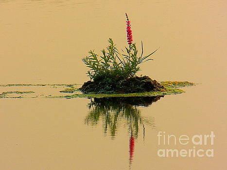 Little Flower Island by Art Sandi