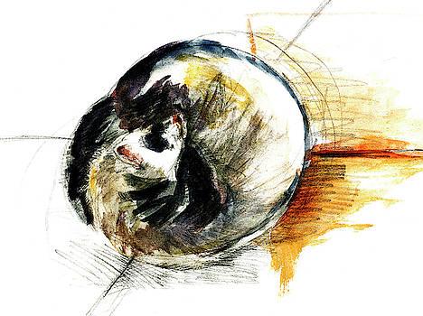 Little furet Sleepy Ferret by Belette Le Pink