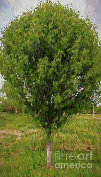 Kathleen K Parker - Little Green Tree
