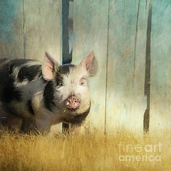 Little piglet by Priska Wettstein