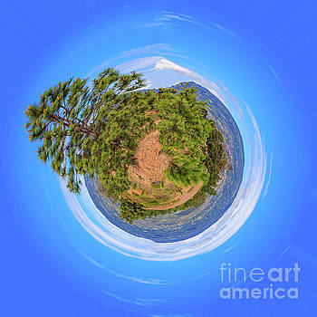 Little Planet - Pine Trees On The Andes Mountains by Devasahayam Chandra Dhas
