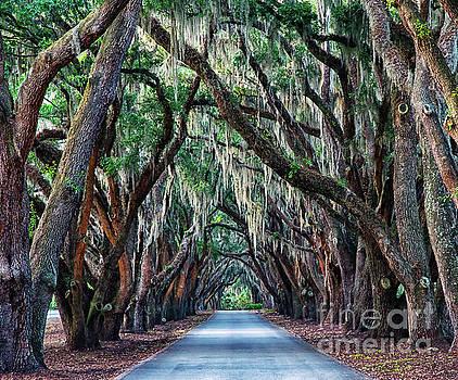 Live Oaks Spanish Moss Hilton Head Island South Carolina by Wayne Moran