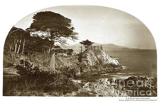 California Views Archives Mr Pat Hathaway Archives - Lone Cypress on Midway Point, Pebble Beach, Circa 1880