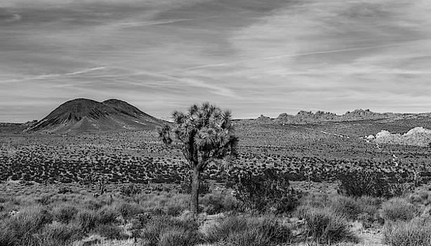 Lone Joshua Tree - Pleasant Valley BW Alt Crop by Peter Tellone
