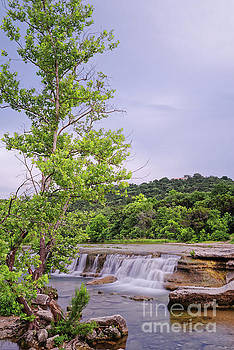 Lone Sycamore Contemplation at Link Falls - Bull Creek Greenbelt Austin Texas Hill Country by Silvio Ligutti
