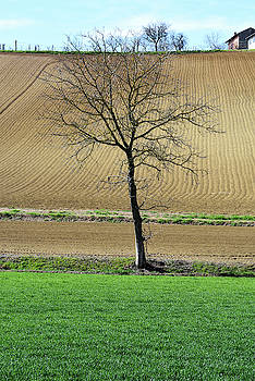 Lone tree 2 by Guido Strambio