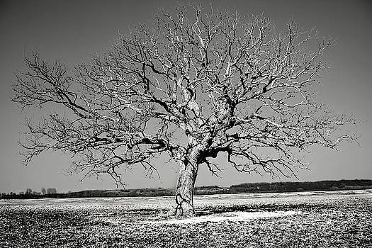 Lone Tree in Field BW-01 by Rick Grisolano Photography LLC