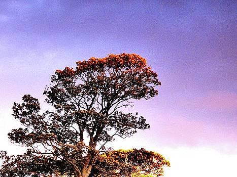 Lone Tree in the Setting Sun by Nik Watt