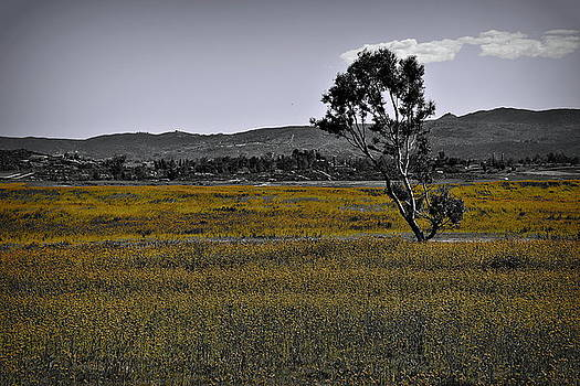 Glenn McCarthy Art and Photography - Lone Tree In Yellow Wildflowers