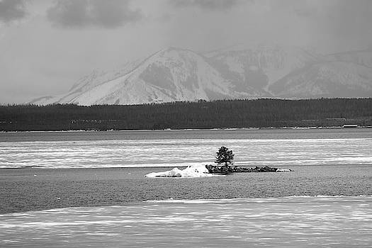 Lone Tree Yellowstone Lake Black and White by Bruce Gourley