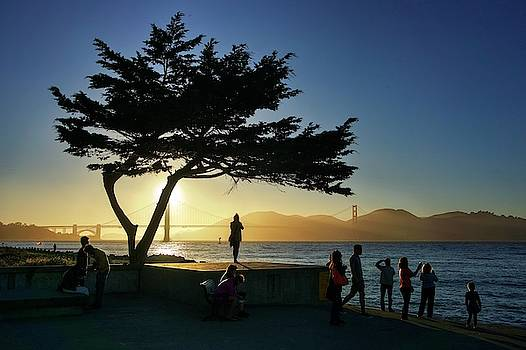 Lonely tree at Crissy Field by Quality HDR Photography