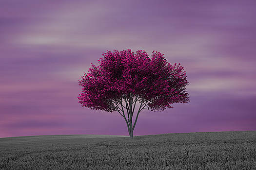 Lonely tree at purple sunset by Vicen Photography