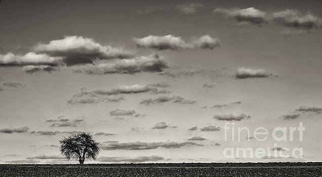 Lonely tree by Bernd Laeschke