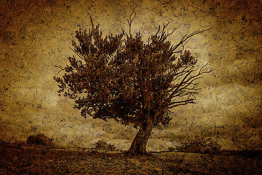 Lonely tree dying Textured by Vicen Photography