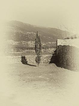 Lonely Tree by Nicholas V K