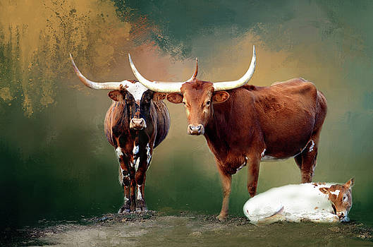 Longhorn Family Portrait by Linda Cox