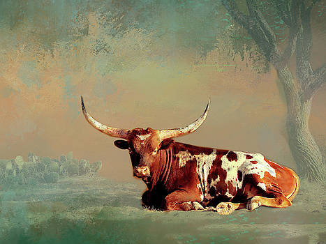 Longhorn Lying Down by Linda Cox