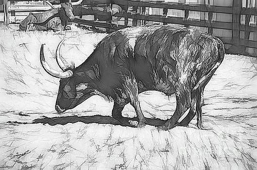 Longhorn Sketched by Diana Mary Sharpton