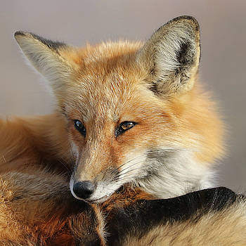 Looking Thoughtful by Doris Potter