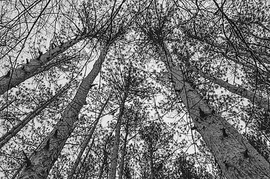 Looking Up - Black and White by Michael Hills