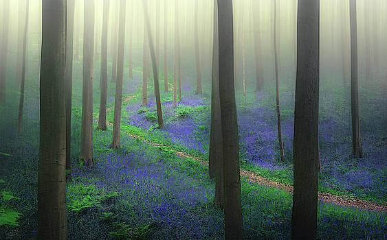Lost in bluebells by Rob Visser